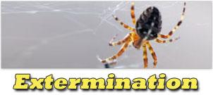 mini-pic-extermination